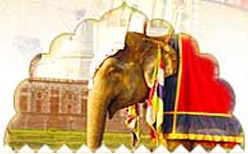 Taj Mahal Photo Gallery;  Elephant